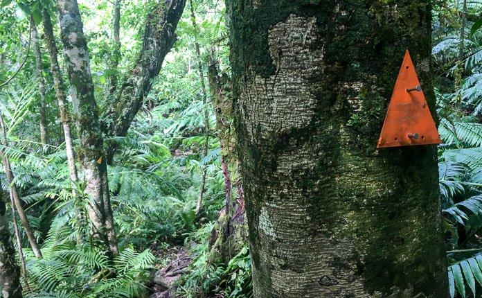 Hiking Rarotonga Jungle