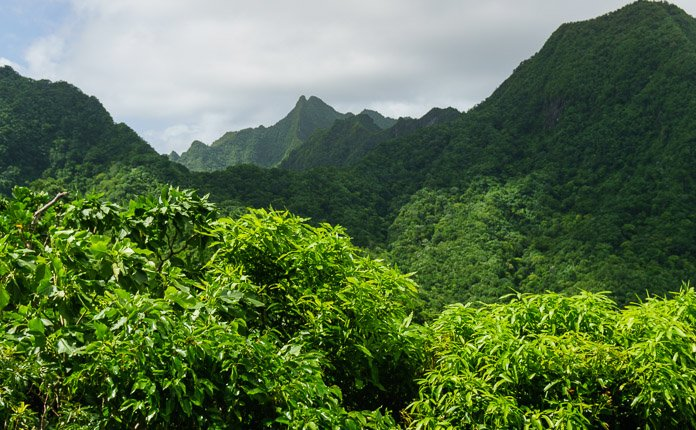 Hiking Rarotonga Jungle
