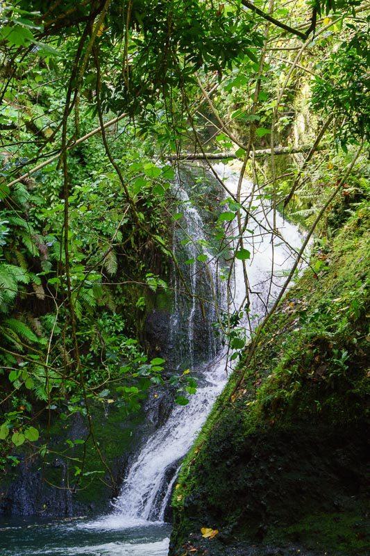 Rarotonga Waterfall