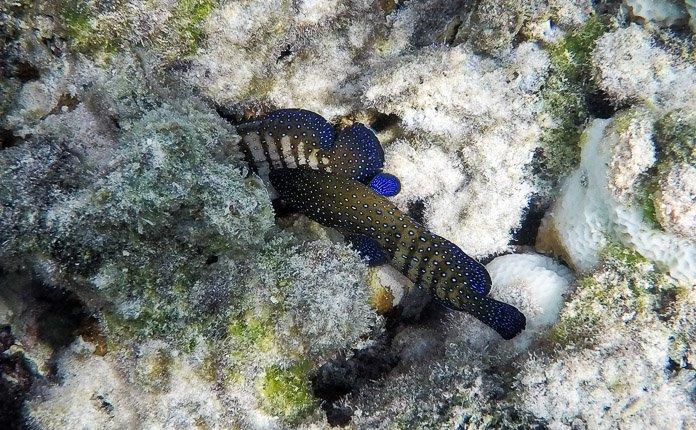 Snorkeling Rarotonga