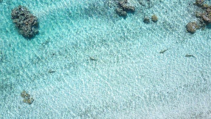 Snorkeling Tikehau