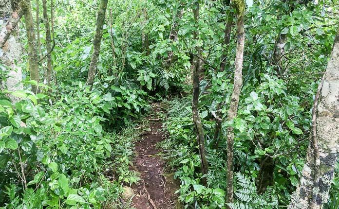Rarotonga Cross Island Hike