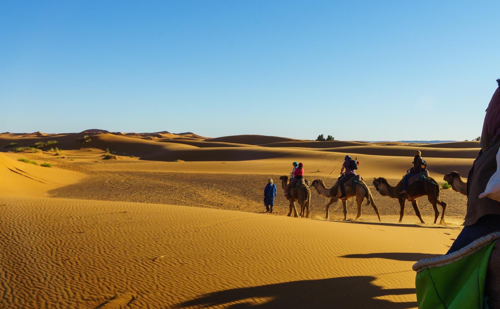 Morocco Camel Ride Sahara Dessert