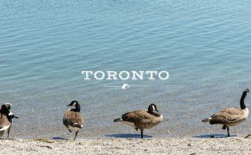 My Summer in Toronto