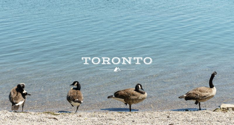 My Summer in Toronto