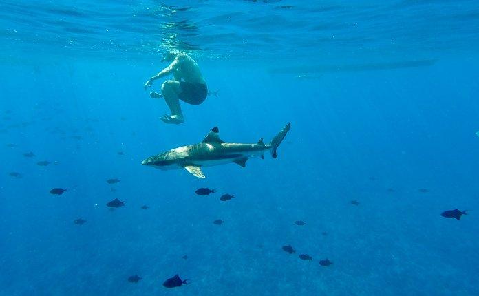 Snorkel tour Bora Bora French Polynesia